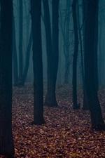 Dusk, forest, trees, fog, leaves
