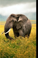 Preview iPhone wallpaper Elephant walk in the flowers