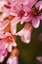 미리보기 iPhone 배경 화면 꽃 근접, 분홍색 꽃잎, 봄