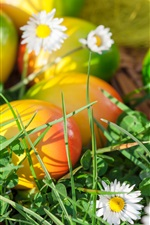 Preview iPhone wallpaper Flowers, grass, spring, Easter eggs