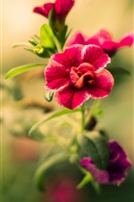 Flowers photography, red petals, bokeh