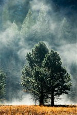 Preview iPhone wallpaper Forest, trees, grass, fog, dawn