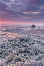 Preview iPhone wallpaper Frost, grass, trees, clouds, sunrise