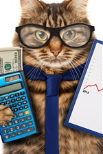 Funny animals, cat, glasses, tie, calculator, money, accountant
