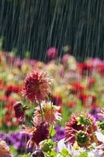 Preview iPhone wallpaper Garden flowers, rainy