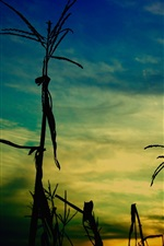 Preview iPhone wallpaper Grass, evening, dusk
