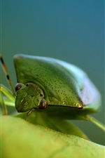 Preview iPhone wallpaper Green bug