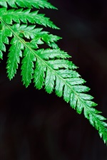 Preview iPhone wallpaper Green fern leaf close-up