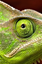 Preview iPhone wallpaper Green iguana head close-up, eye