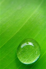 Preview iPhone wallpaper Green leaf, dew, macro photography