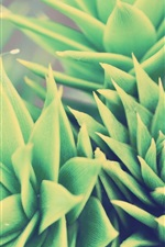 Preview iPhone wallpaper Green plants, houseplant, leaf