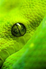 Preview iPhone wallpaper Green snake close-up, eye