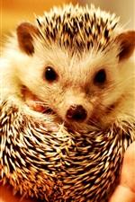 Preview iPhone wallpaper Hedgehog in hand