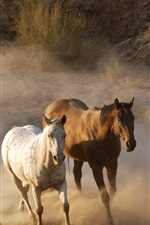 Preview iPhone wallpaper Horses running, dust