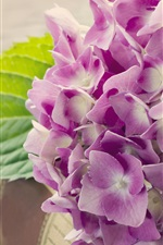 Preview iPhone wallpaper Hydrangea, pink flowers, book