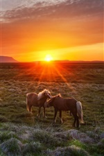 Preview iPhone wallpaper Iceland, sunset, grass, horses