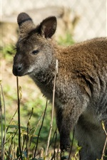 Preview iPhone wallpaper Kangaroo rest, grass, fence