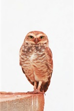 Preview iPhone wallpaper Little owl, side, white background