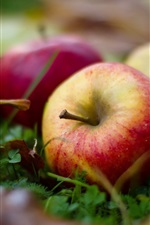 Preview iPhone wallpaper Mature apples, ground, leaf, grass