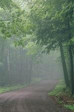 Morning, forest, trees, road, fog