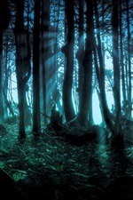 Preview iPhone wallpaper Mysterious Forest, Pacific Northwest
