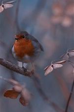 Preview iPhone wallpaper Nature, bird, twigs, bokeh