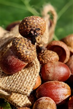 Preview iPhone wallpaper Nuts, acorns