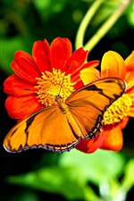 Preview iPhone wallpaper Orange butterfly, red flowers