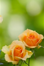 Preview iPhone wallpaper Orange petals roses, flowers, leaves, bokeh