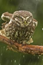 Preview iPhone wallpaper Owl in rain