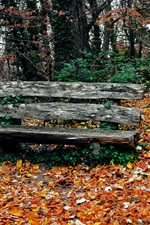 Park in autumn, trees, yellow leaves, bench