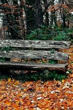 Parque no outono, árvores, folhas amarelas, banco