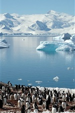 Pinguins, mar, geleiras
