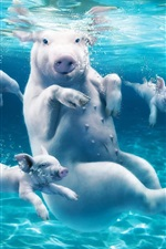 Preview iPhone wallpaper Pigs at underwater, happy swimming