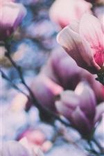 iPhone壁紙のプレビュー ピンクのマグノリアの花、小枝