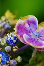 Purple and blue flowers close-up