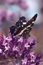 Preview iPhone wallpaper Purple flowers, butterfly