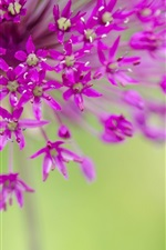Preview iPhone wallpaper Purple flowers, small flowers photography