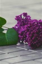iPhone обои Фиолетовые сиреневые цветы, листья