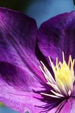 Preview iPhone wallpaper Purple petals clematis close-up, pistil