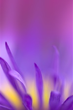 Preview iPhone wallpaper Purple petals flower macro photography, blurry background