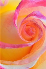 Preview iPhone wallpaper Rose macro photography, pink petals