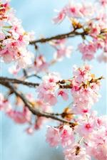Preview iPhone wallpaper Sakura bloom, pink flowers, twigs, spring