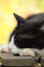 Preview iPhone wallpaper Sleep cat, bench