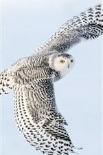 미리보기 iPhone 배경 화면 눈 올빼미 비행, 날개, 하늘