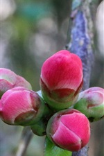 Preview iPhone wallpaper Spring, pink flower buds, tree, twigs