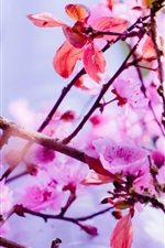 Preview iPhone wallpaper Spring, pink flowers bloom, twigs, tree