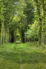 Summer forest, grass, green, path