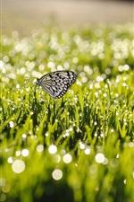 Summer, grass, after rain, butterfly, water drops