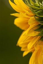 Preview iPhone wallpaper Sunflower side view